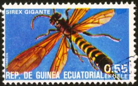Equatorial Guinea-2