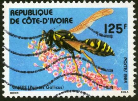 Ivory Coast-1