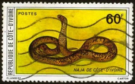 Ivory Coast-3