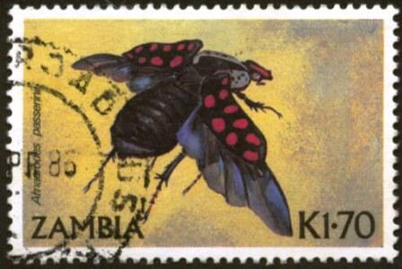 Zambia-1