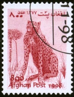 Guépard iranien : une sous-espèce rarissime à protéger Afghanistan-7
